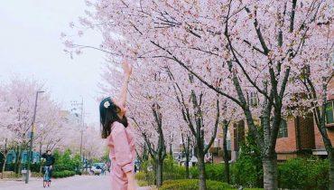 SEOUL : PLANES DE PRIMAVERA